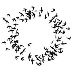 wandtattoo kreisende schwalben