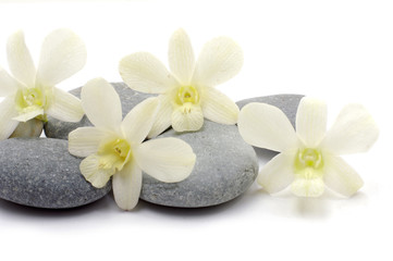 Beautiful orchid with stack of pebbles