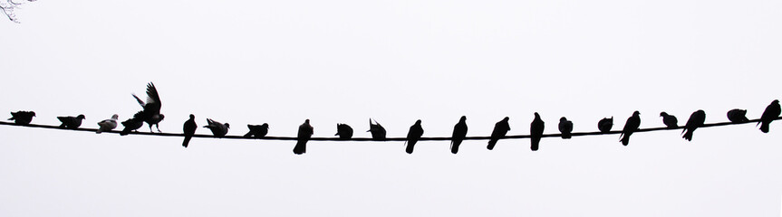 Flight of pigeons sitting on a wire on a background of the sky