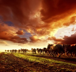 Running wild horses in sunset