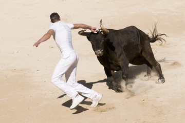 Photo sur Aluminium Corrida course camarguaise