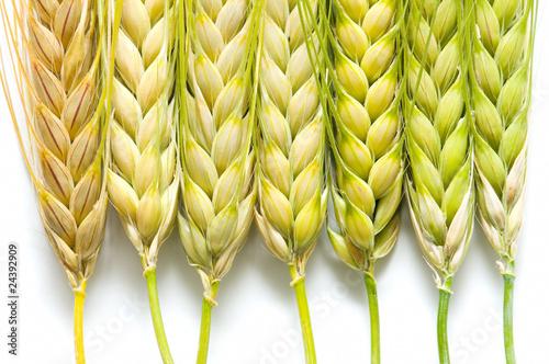 Resultado de imagen para espigas de cebada