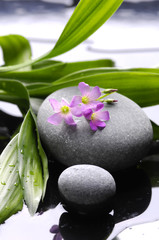 Poster de jardin Spa atomatherapy still life, spa and wellness concept
