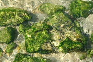 Eau claire et algues sur rochers