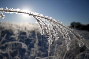 Sunlight through snowy field grass