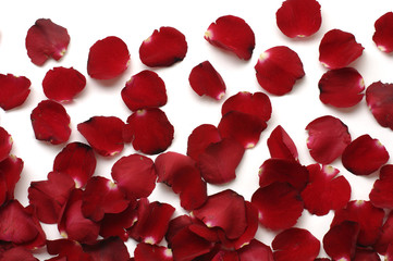Rose petals on white