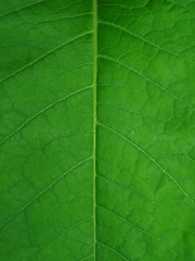 Green leaf as the texture.