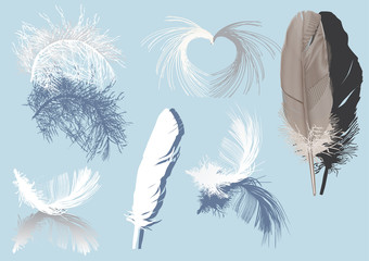 feathers and shadows isolated on blue