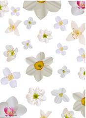 light flowers background illustration