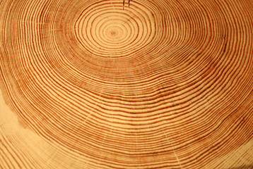 Year rings of a tree