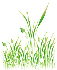 Green grass, object white isolated, vector