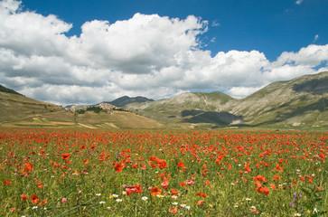 Castelluccio di Norcia - Valnerina - Umbria