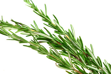 Branch of spice rosemary isolated over white