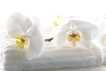 White orchid spa