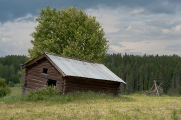 Abandon small barn with pine forest in background