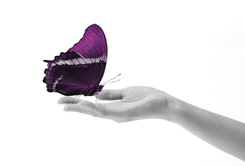 Butterfly on hand purple