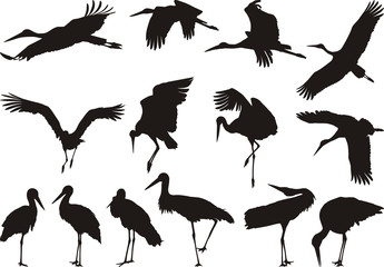 Stork silhouettes - vector