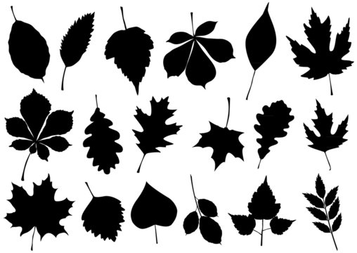 Vector illustration set of 18 autumn leaf silhouettes.
