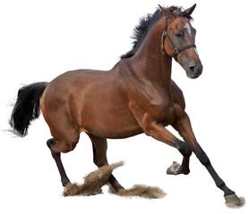 Stores à enrouleur Chevaux cheval