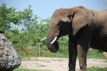 Éléphant dans la nature 1