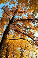 autumn tree in sunset light