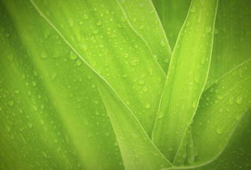 green leaf with drops of water .