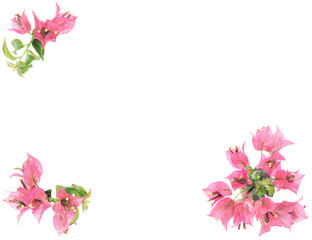 Pink bougainvillea frame