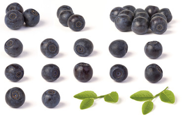 Various wild blueberries