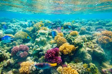 Foto op Aluminium Onder water Tropical Coral Reef. Red sea