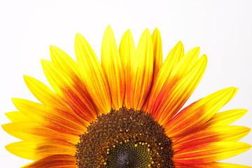 Hintergrund tor gelbe Sonnenblume Blüte