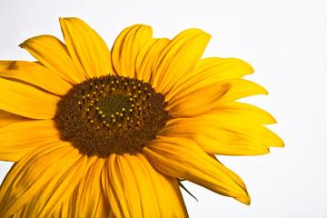 Schöne gelbe Blüte