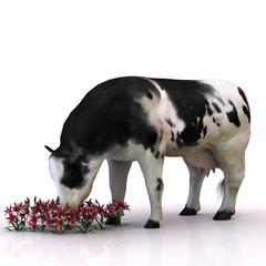 Kuh, die Blumen frisst