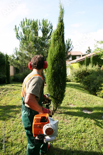 Jardinier paysagiste p pini riste taille un cypr s photo for Tarif jardinier paysagiste
