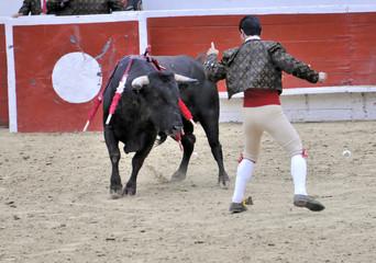 Forcado & Bull