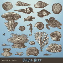 vector set: coral reef - variety of sea-design elements
