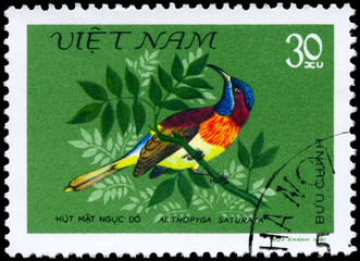 VIETNAM - CIRCA 1981 Aethopyga saturata