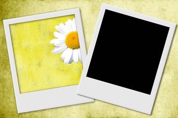 fondo amarillo marco fotos instantaneas margarita