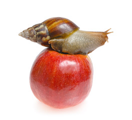 Snail on red apple