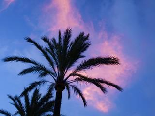 Palme und abstrakter Himmel