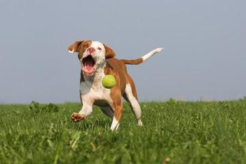 schnapp den Ball