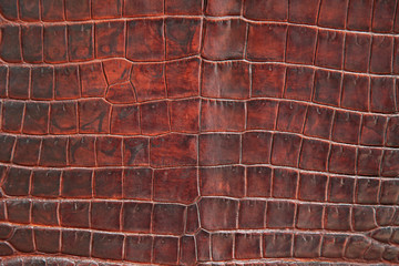 Photo sur Aluminium Cuir Krokodil Leder Textur