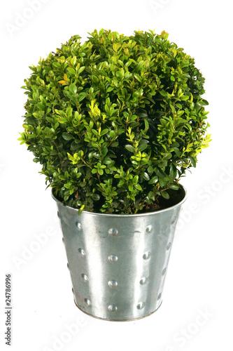 buis en pot acier d coratif et design pour jardin l gant photo libre de droits sur la banque. Black Bedroom Furniture Sets. Home Design Ideas