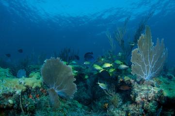 Coral Ledge Compostion