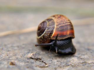 snail on concrete