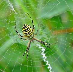 spider in her spiderweb