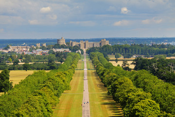 Fototapete - The Long Walk and Windsor Castle
