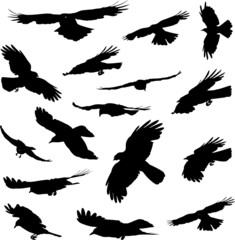 Birds flying silhouettes