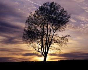 夜明の哲学の木