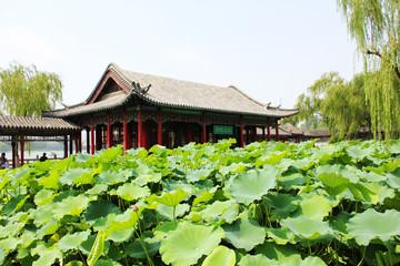 济南大明湖荷香茶社