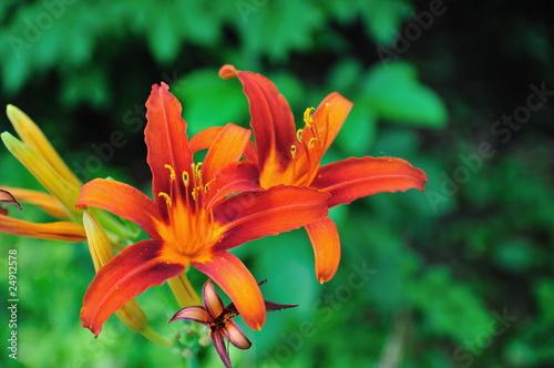 Fleur De Lys Orange Stock Photo And Royalty Free Images On Fotolia